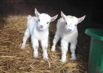 Petting Zoo – Various Animals Hire   UK