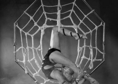 delias_spider2