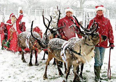reindeer_for_christmas5