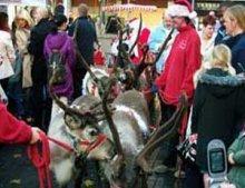 reindeer_for_christmas6