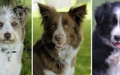 Canine Freestyle Team – Dog Show | UK