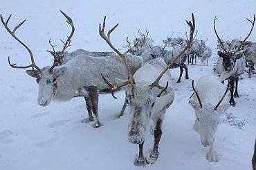 booking agent for Christmas reindeer