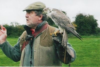 The Falconry – Bird Handlers & Bird Displays | UK