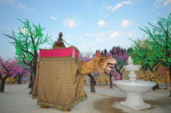 amir-camel-walkabout10