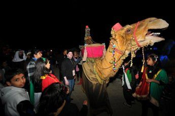 amir-camel-walkabout13