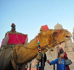 amir-camel-walkabout15