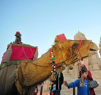 amir-camel-walkabout3