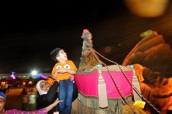 amir-camel-walkabout7