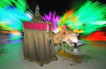 amir-camel-walkabout8